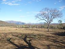 Albero preveggente scarso dell'acqua del paesaggio del deserto fotografia stock libera da diritti