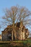 Albero prima di vecchia casa Fotografia Stock