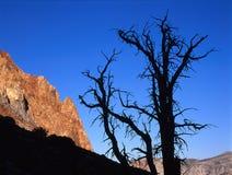 Albero profilato e roccia rossa dalla traccia del passaggio di Piute, John Muir Wilderness, Sierra Nevada Fotografie Stock Libere da Diritti