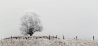 Albero pungente gelo Fotografia Stock