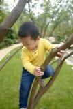 Albero rampicante del ragazzo fotografia stock