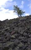 Albero roccioso Fotografia Stock Libera da Diritti