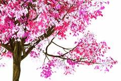 Albero rosa della molla Immagini Stock