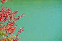 Albero rosso fotografie stock libere da diritti