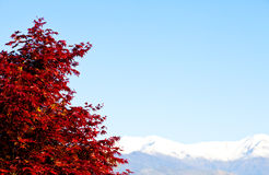 Albero rosso con la priorità bassa delle alpi Immagine Stock Libera da Diritti