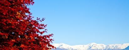 Albero rosso con la priorità bassa delle alpi Fotografia Stock Libera da Diritti