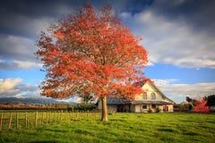 Albero rosso e una casa Immagine Stock Libera da Diritti