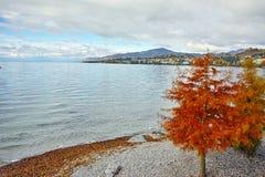 Albero rosso sul lago Lemano a Montreux, Cantone di Vaud Immagine Stock