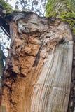 Albero rotto da vento Fotografia Stock Libera da Diritti