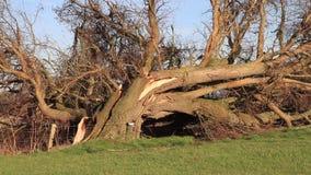 Albero rotto dopo una tempesta pesante stock footage