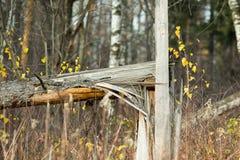 Albero rotto in un campo fotografia stock libera da diritti