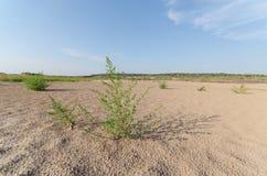 Albero in sabbia Fotografia Stock Libera da Diritti