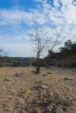 Albero in sabbia Fotografia Stock
