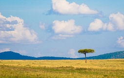 Albero in savanna, paesaggio africano tipico Fotografie Stock