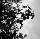 Albero scuro Fotografie Stock