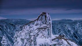 Albero secco sulla neve nella stagione invernale fotografia stock