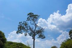 Albero selvaggio e strano sui precedenti del cielo blu Fotografia Stock