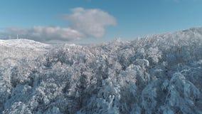 Albero sempreverde aereo Forest Shot di Sunny Snow Covered Mountain Top Snowy di cavalcavia Vista aerea degli alberi che gettano  video d archivio