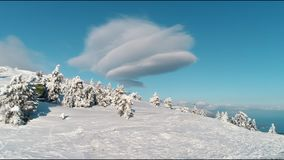 Albero sempreverde aereo Forest Shot di Sunny Snow Covered Mountain Top Snowy di cavalcavia Vista aerea degli alberi che gettano  stock footage