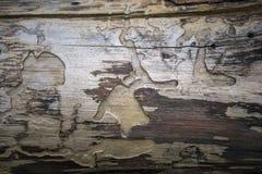 Albero senza corteccia Immagini Stock Libere da Diritti