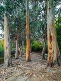 Albero senza corteccia in parco fotografia stock
