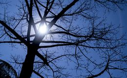 Albero senza foglie Immagine Stock Libera da Diritti