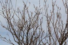 Albero senza foglie immagini stock libere da diritti