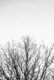 Albero senza foglie immagini stock
