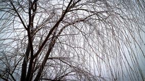 Albero senza foglie coperte da ghiaccio Immagini Stock Libere da Diritti