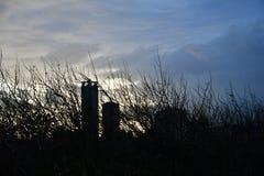 Albero senza foglie e cielo nuvoloso scuro sopra orizzonte immagine stock