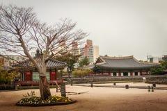 Albero senza foglie a Jeju Mokgwana Immagine Stock