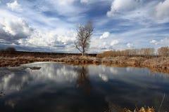 Albero senza foglie nel campo paludoso di autunno Immagine Stock