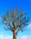 Albero senza foglie nell'inverno fotografia stock