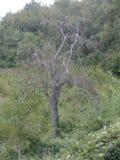 Albero senza foglie nella campagna fotografie stock