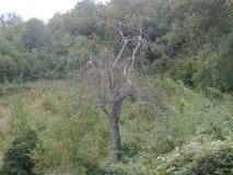 Albero senza foglie nella campagna fotografia stock