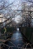 Albero sfrondato del fiore di ciliegia lungo il fiume di Meguro a Tokyo Immagini Stock Libere da Diritti