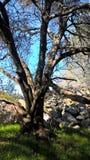 Albero sfrondato in erba verde dal mucchio della roccia Fotografia Stock