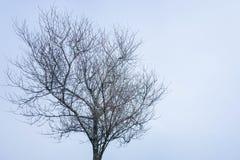 Albero sfrondato in inverno fotografie stock