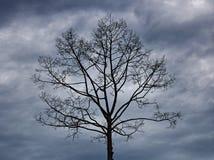 Albero sfrondato in nuvola scura Fotografie Stock Libere da Diritti