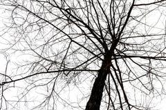 Albero sfrondato sul cielo fotografie stock libere da diritti
