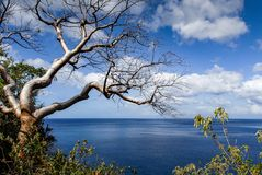 Albero sfrondato tropicale fotografia stock
