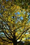 Albero in sole fotografie stock libere da diritti