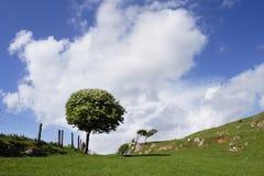 Albero solitario Gower del sud Fotografia Stock Libera da Diritti