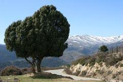 Albero solitario in Sardina Immagine Stock