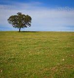 Albero solitario su cielo blu Fotografia Stock