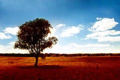 albero solo fotografia stock libera da diritti