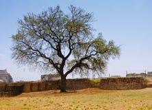 albero solo Fotografia Stock