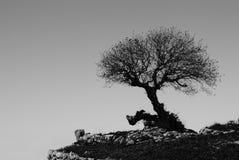 Albero solo Fotografie Stock
