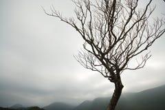 albero solo Fotografie Stock Libere da Diritti