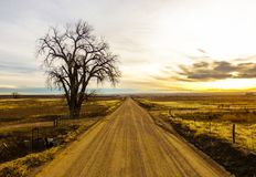 Albero solo accanto alla strada non asfaltata del paese della contea di Weld colorado fotografia stock